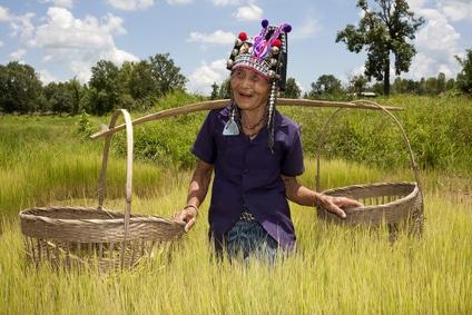 Werkende vietnamese vrouw in de rijstvelden tijdens familiereis Vietnam